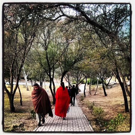 Beautiful Path at Damanekoh Islamabad . winter shawls trees color Pakistan