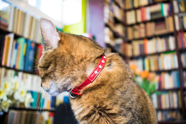 Close-Up Of Cat In Library