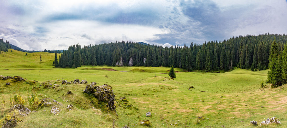 Padis, Transylvania Hiking Hungary Padiș Romania Transylvania Beauty In Nature Cloud - Sky Day Forest Grass Green Color Hungarian Landscape Mountain Nature No People Outdoors Scenics Sky Tranquil Scene Tranquility Tree