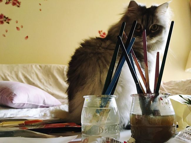 Acrylic Paint Painting Brushes Work Space and a Cat Persiancat