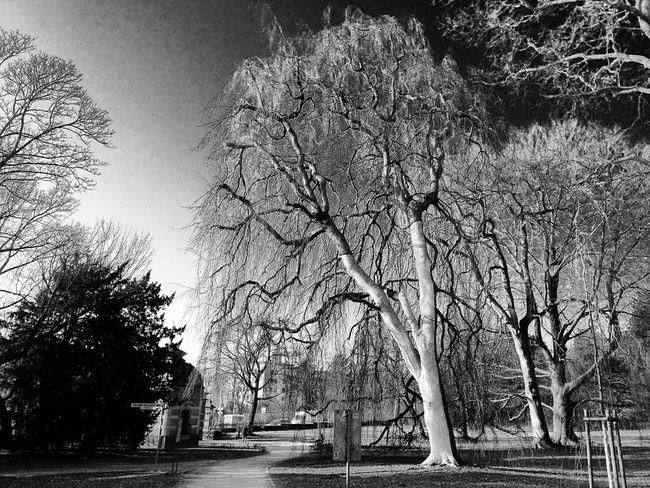 Darmstadt Park Nature Trees Monochrome