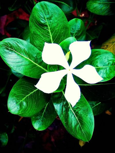 Single Flower... Green Color Leaf Nature Outdoors Day Beauty In Nature Freshness EyeEmNewHere EyeEm Selects Close-up