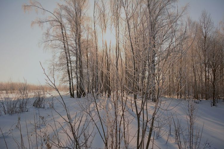 Февраль Ski Trip Morning Sun -22 Degrees February Nature Cold Temperature Winter Snow Tree No People Beauty In Nature Forest Bare Tree Freshness