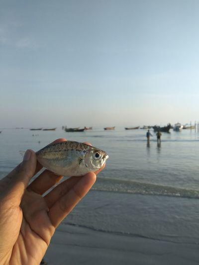 Human Hand Human Body Part Water One Person Animal Wildlife Reptile Animals In The Wild People Outdoors Nature Adult Sea Day Animal Themes Adults Only Sky Beauty In Nature Sea Life Close-up Fish Tradisional Fish Chatcher Beach Life Beach View Beach Time