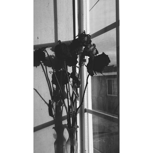 Flowers Dead Flowers Dead Plant Dead