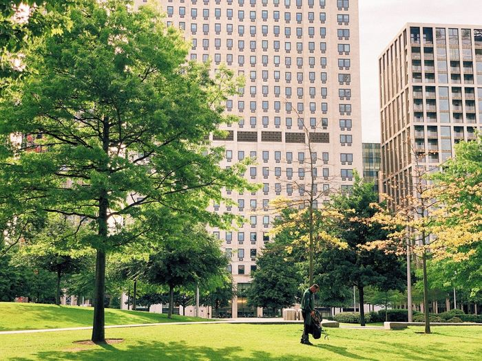Trees and buildings in city