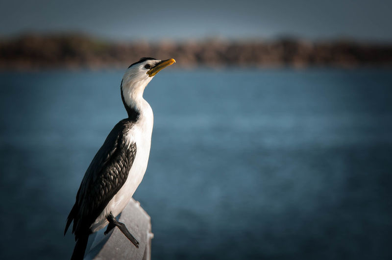 Close-Up Of Gray Heron Perching By Sea Against Sky
