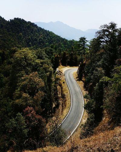 Tree Landscape Curve Mountain Nature Jungle Shoot Roadcurve Mussoriediaries Mussoorie Ride