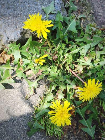 Flowers Yellow Yellow Flower