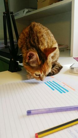 Kittycat Venere Reading Homework Writing Cat Crazy Cat Home Sweet Home Details Me Italy Love ♥ Desks From Above