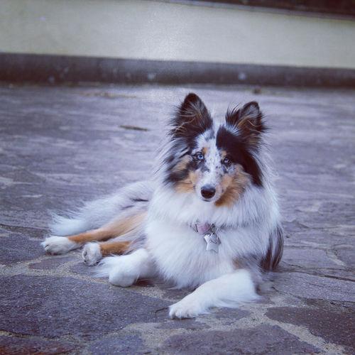 Portrait of dog sitting on sidewalk in city