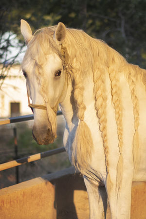Incredible horse EyeEm Selects Water Oil Pump Close-up