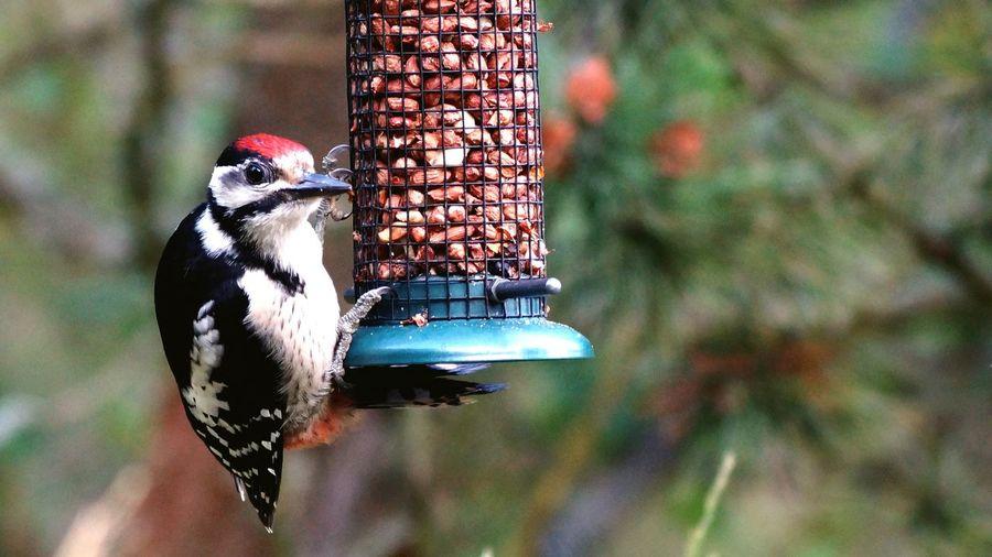 Close-up of bird hanging