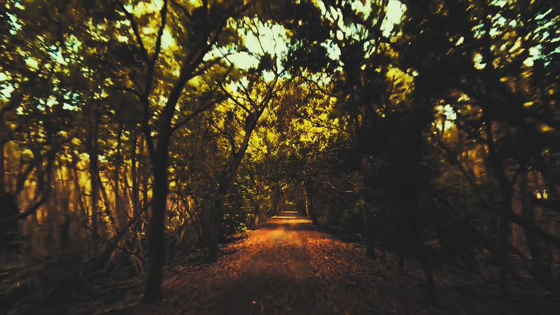 Woods-Tunel-Warp-Speed Tree Leaf Outdoors Nature Landscape No People Beauty Autumn Sunset Beauty In Nature Tree Area Day Freshness Sky EyeEmNewHere Live For The Story Week On Eyeem The Great Outdoors - 2017 EyeEm Awards Colors Multi Colored Nature Rural Scene Yellow Beauty In Nature Color Blockıng