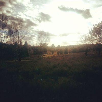 Heidefläche bei Lutterloh