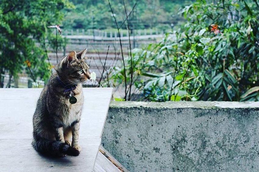 🐁🐀 고양이들의천국 대만 허우통 고양이마을 대만여행 타이페이 타이완 여행 빈카메라 Taipei Taiwan Travel Houtong Cat Cats Bincamera
