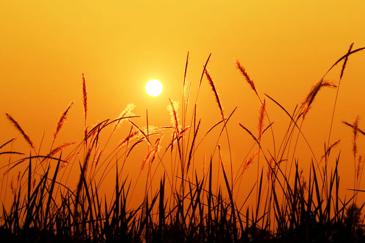 Central Sunset Meadows. Sunset Beauty In Nature Growth Tranquility Sky Tranquil Scene Sun Plant Orange Color Scenics - Nature Nature Field Crop  No People Land Agriculture Rural Scene Landscape Cereal Plant Sunlight Outdoors Stalk Romantic Sky Timothy Grass