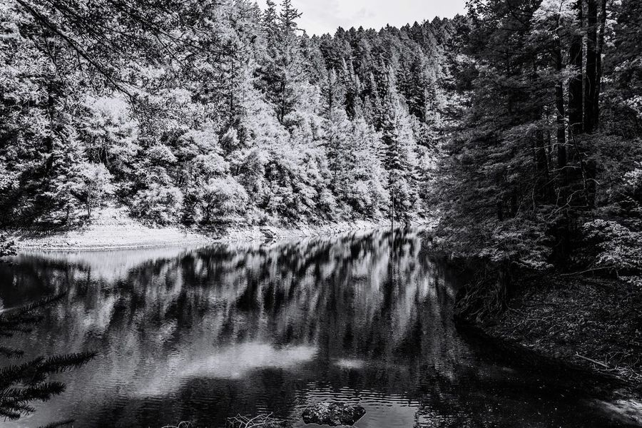 Forest by the lakeside reflected on the lake like a mirror. Nature has its beauty in black & white Tranquility Refkections. Riverside Lakeside Beauty National Park Black And White Photography Nature Photography Forest. Natural Reserve. Tree Nature Water Outdoors Day Beauty In Nature No People Scenics Sky