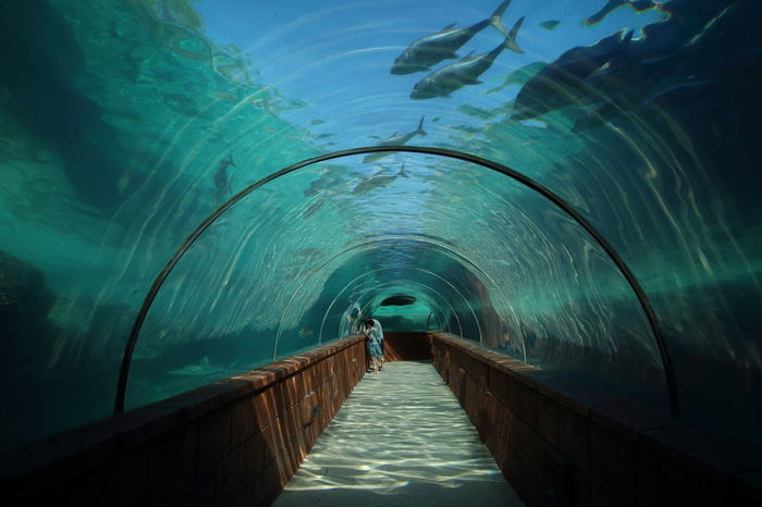 Beautiful glass tunnels!😊 Nature Sea Water Aquarium Aquarium Life Fish Glass Tunnel Architecture Architectural Design in Atlantis, Bahamas.  The Secret Spaces