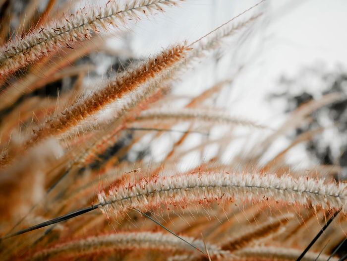 Close-Up Of Dried Plant During Winter