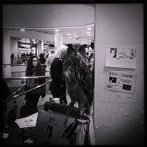 Short Story Birds Raptor The Photojournalist - 2016 EyeEm Awards