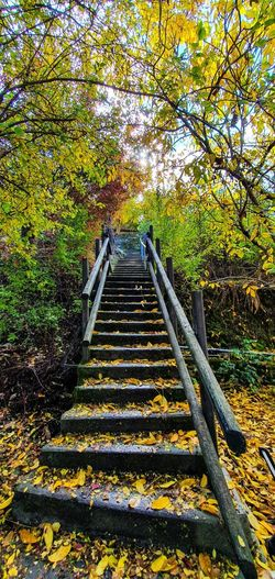 Staircase leading towards forest during autumn