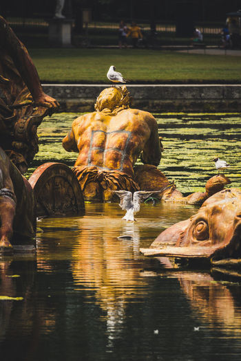 Reflection of sculpture in Fountain in the garden of Versailles, France. Animal Animal Themes Animal Wildlife Animals In The Wild Day Grass Group Of Animals Herbivorous Lake Mammal Nature No People Outdoors Reflection Reflections In The Water Representation Sculpture Statue Vertebrate Water Waterfront