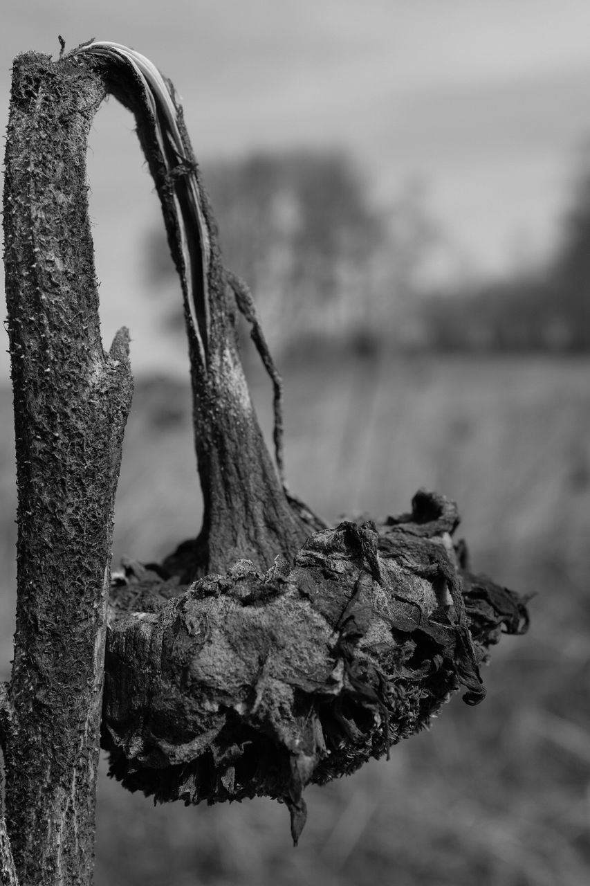 focus on foreground, outdoors, dry, close-up, nature, day, no people, dead plant, water, tranquility, beauty in nature, dead tree, sky