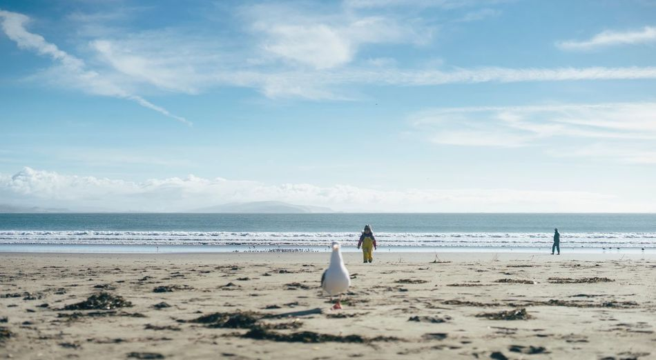 Small child and seagull West Coast Pacific Ocean Child Playing With Scale Sea Beach Land Water Sky Sand Scenics - Nature Beauty In Nature Cloud - Sky Horizon Horizon Over Water Nature Real People Day Tranquil Scene Tranquility Outdoors