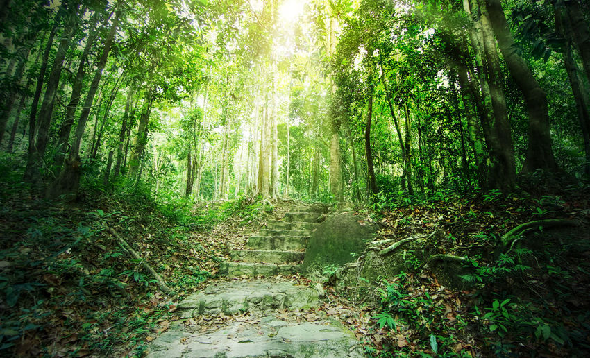 Stairs in tropical forest with sunbeams at national park in Phangan island, Thailand Evergreen Tree Stairs Wood Bamboo Grove Beauty In Nature Day Evergreen Foliage Forest Growth Jungle Leaves Light And Shadow Nature No People Outdoors Plants And Garden Scenics Sun Rays Sunshine Tranquil Scene Tranquility Tree Tree Trunk WoodLand
