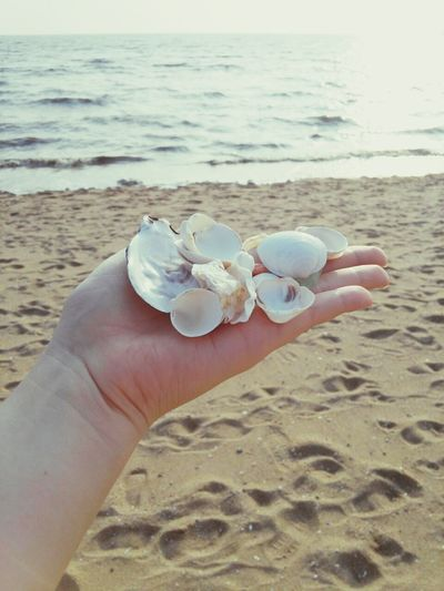 Pretty white shells picked up by the seaside. Hi!