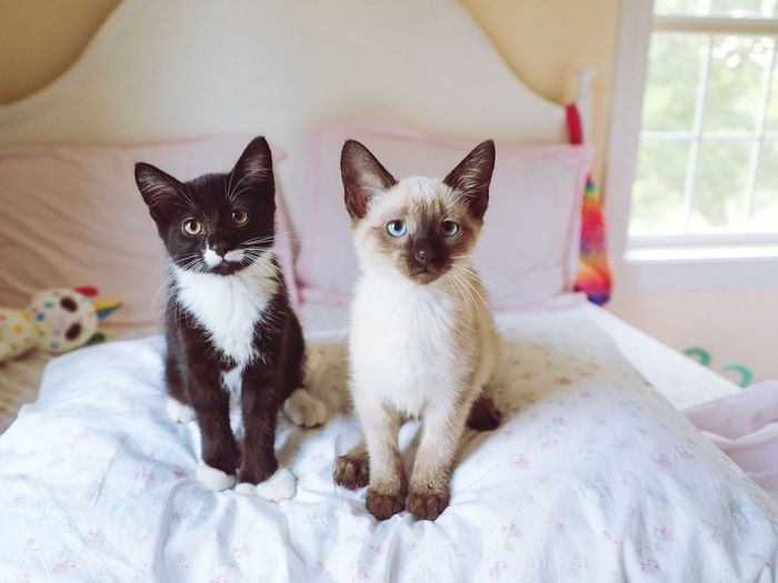Kittens Domestic Pets Mammal Animal Themes Domestic Animals Animal One Animal Bed Furniture Indoors  Domestic Cat Cat Sitting No People Feline Home Interior Portrait Looking At Camera Small