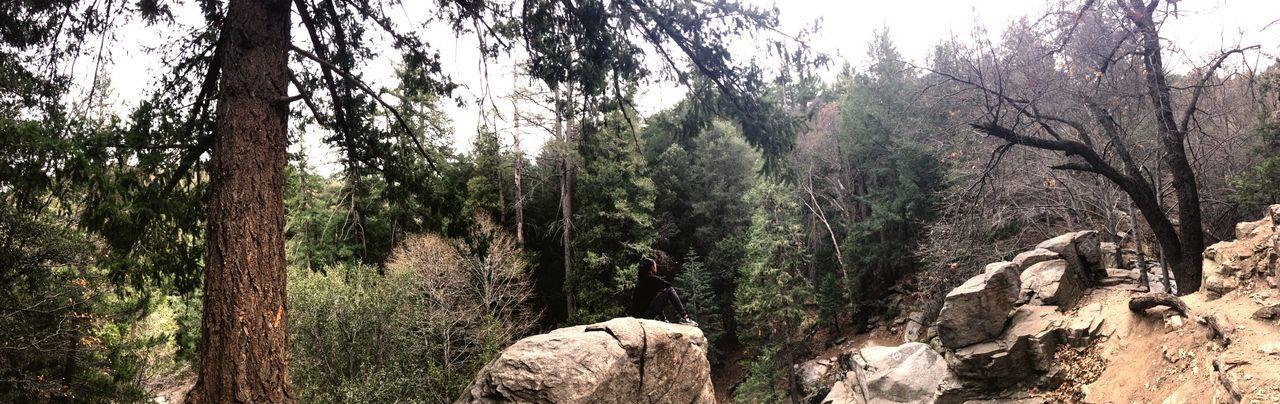 Nature Naturelovers Outdoors Trees Hiking