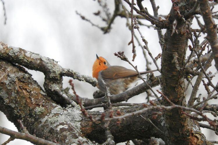 Bird dance Bird