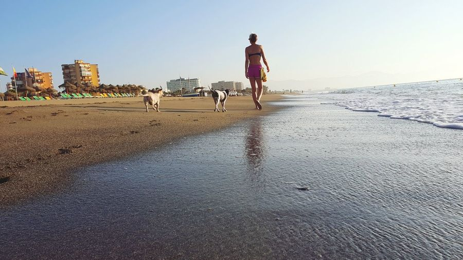 Rear view of dog walking on beach