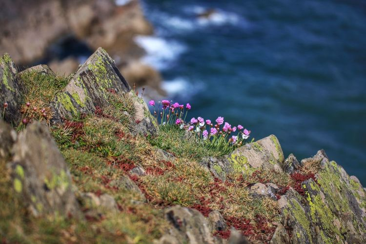 Close-up of pink flowering plant on rock