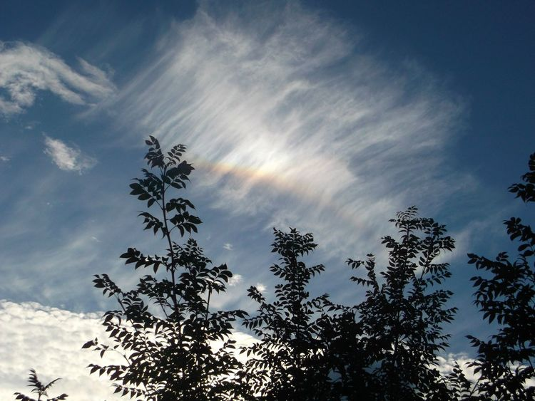 Sky Sky And Clouds Skylovers Sky_collection Skycollection Skyandclouds  Skyviewers Sun Dog Trees And Sky The Week On Eyem EyeEm Gallery Eyeem Market LONDON❤Outdoor Photography Outside Photography Nature_ Collection  Nature Photography