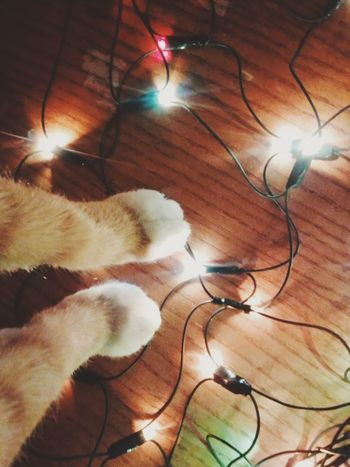 Indoors  Nikon Lightroom Romania Love ♥ My Year My View Handinframe Portraiture Makeportraits Cat Cats 🐱 Winter Christmas Lights Christmas Decorations