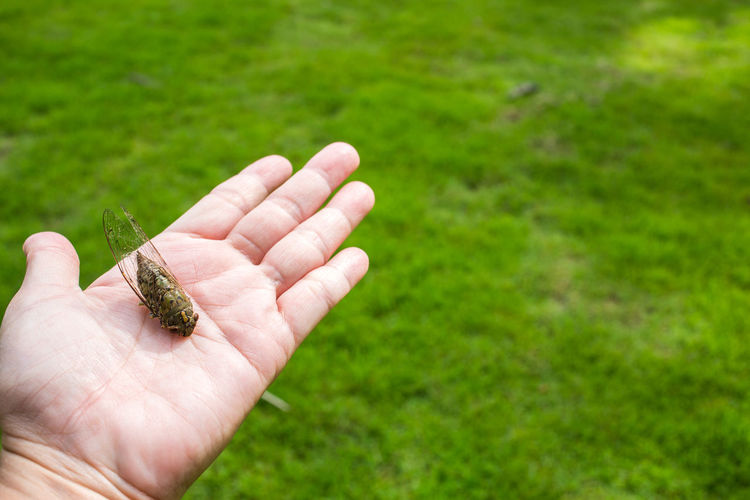 Cropped image of hand holding small lizard