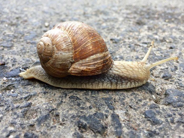Snail Animals Nature
