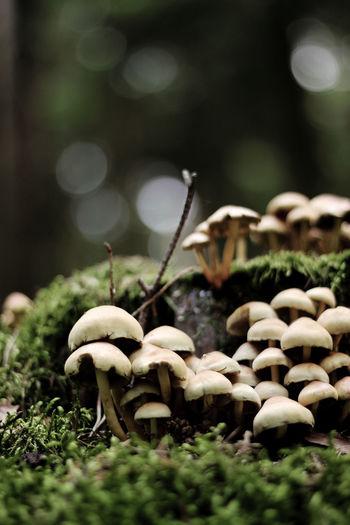 Pilze aus