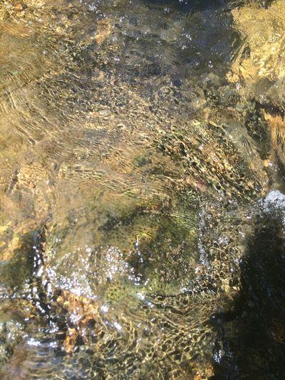 Creek Creek Bottom Rock Water Running Waters Nature Relaxing Atmosphere
