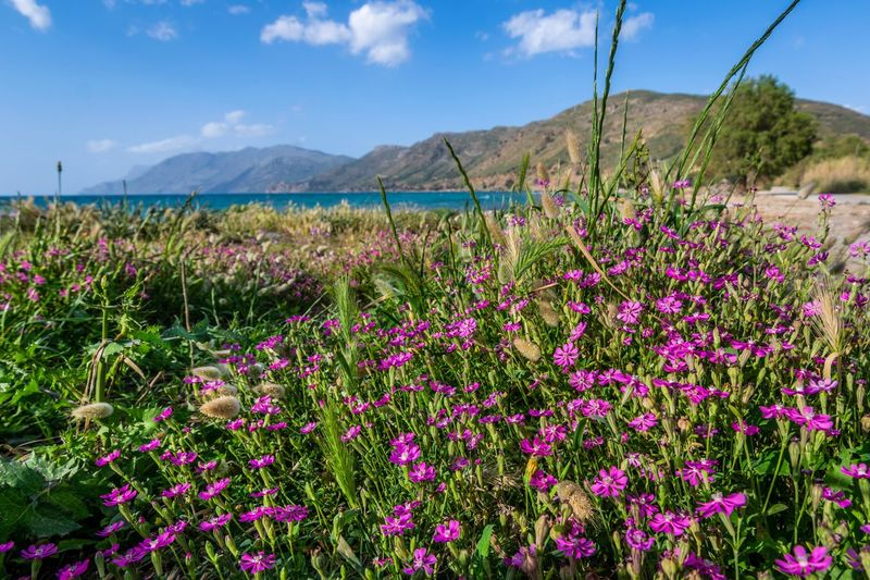 Seaside EyeEm Gallery Colorful Springtime Spring My Best Photo Crete Flower Flowering Plant Plant Beauty In Nature Sky Growth Springtime Decadence Freshness Nature Land Cloud - Sky Field Mountain Tranquility Day No People Scenics - Nature Vulnerability  Fragility Landscape Environment