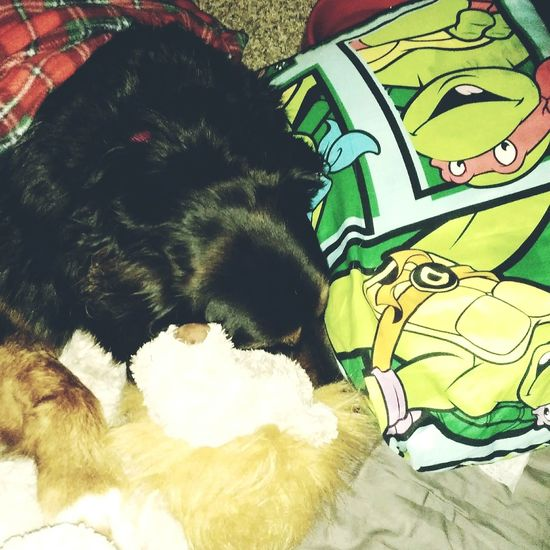 Shadow's ankle is still sore from this weekend. All tucked in and ready for bed though :) Pets Domestic Animals Mammal One Animal Animal Themes Indoors  Lying Down Relaxation No People Dog Home Interior Close-up Peaceful Shadow Dogs Of EyeEm Spoiled Tucked In Time For Bed Goodnight Shadow