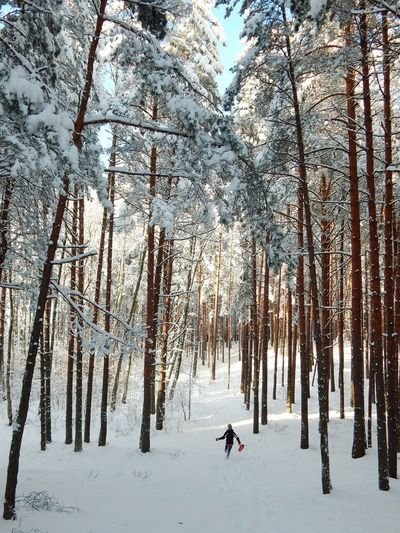 Winter Tree Cold Temperature Snow Nature Beauty In Nature Outdoors Day People Riga Latvia Forest Landscape Beauty In Nature Winter Sport Nature Deep Snow Frozen Leisure Activity One Person