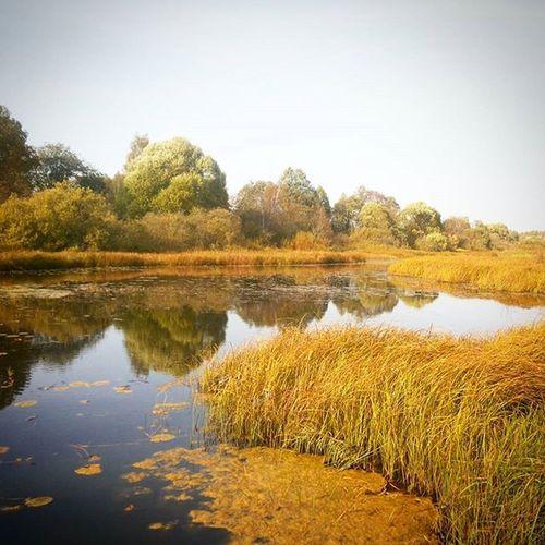 Орша речка река рекаорша Кувшинки щучьиместа осень