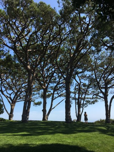 Tree Grass Golf Leisure Activity Men Branch Full Length Day Golf Course Nature Sport Lifestyles Beauty In Nature Outdoors Adult One Person Green - Golf Course One Man Only People Adults Only Shadows