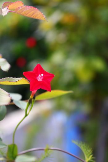 Growth Petal Flower Day Close-up Focus On Foreground Outdoors Plant No People Nature Red Beauty In Nature Blooming Pink Color Leaf Fragility Flower Head Freshness I Want To Know Your Secret, C I Always Thinking About U, G Thank You,❤️ 감사합니다
