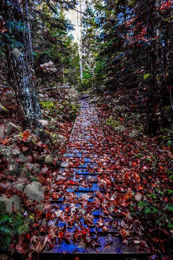 Tree Plant Autumn Forest Plant Part Leaf Change Land Nature Direction The Way Forward Growth Day Tranquility No People Beauty In Nature Falling Non-urban Scene Footpath Tree Trunk WoodLand Outdoors Leaves Messy Fall