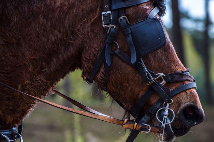 Focus Horse Domestic Animals One Animal Animal Themes Working Animal Animal Head  Focus Focus On Foreground Close-up D750 Nikon Nikonphotography Full Frame Netherlands Side View